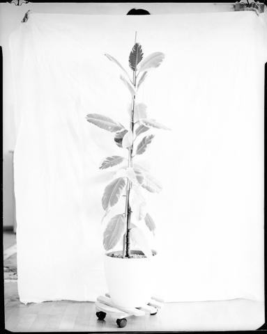 Gerlinde_Miesenboeck_Botanica06