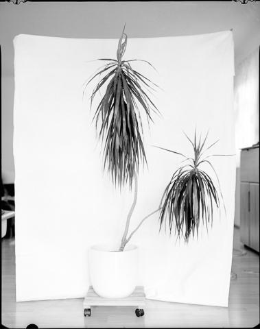 Gerlinde_Miesenboeck_Botanica07