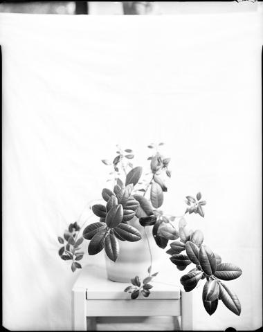 Gerlinde_Miesenboeck_Botanica16-60×80