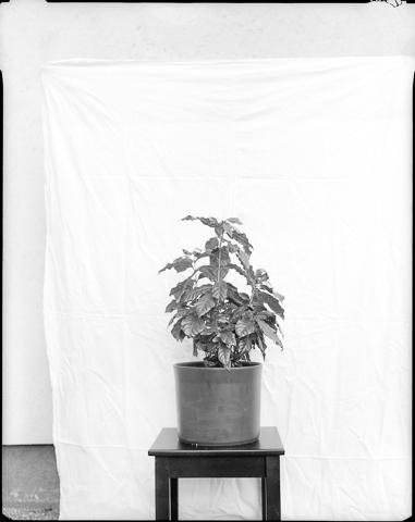 Gerlinde_Miesenboeck_Botanica20-60×80